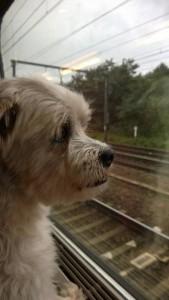 Bintie TGV